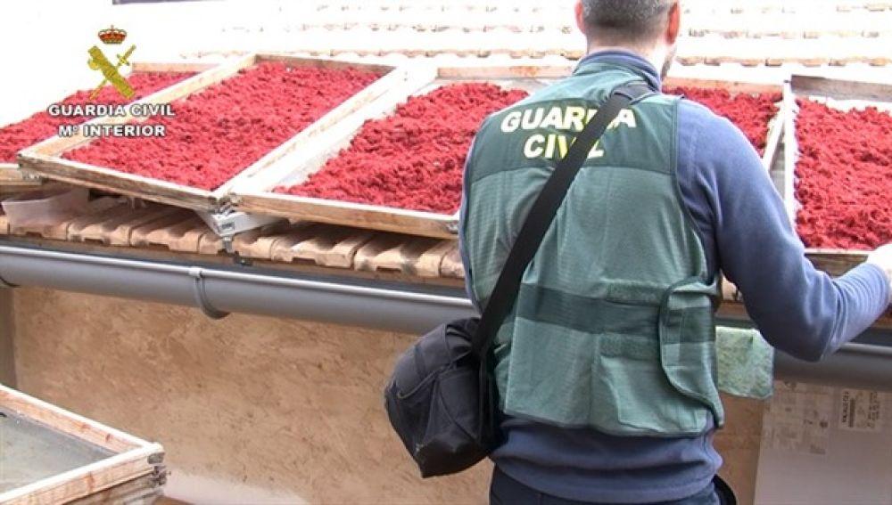 La Guardia Civil desmantela en Novelda un laboratorio clandestino que adulteraba azafrán